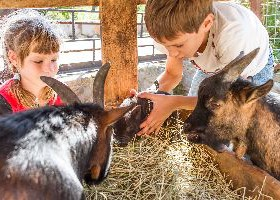 Fairs & Festivals – What to Know About Animal Exhibits