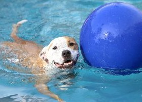 Dog Swims