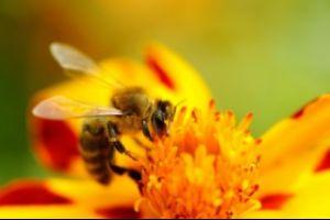Beekeeping (Apiary) Inspection Program